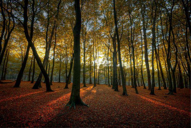 Hopwas_Woods_Sun