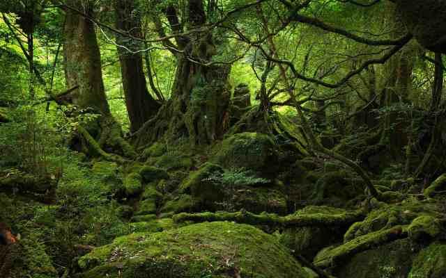 YukoshimaForest