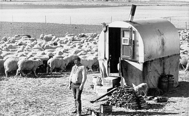 Sheep Camps Are Alive And Well In The West Preindustrial