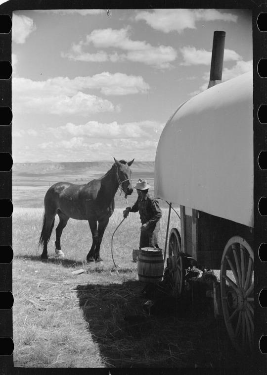 Sheep herder, Madison County, Montana.